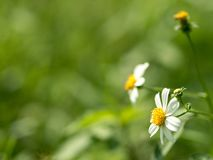 Bloemen in weelderige groene weiden royalty-vrije stock afbeeldingen