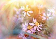 Bloemen in weide Stock Foto's