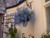 Bloemen in Werf achter een winkel in Chester in Engeland royalty-vrije stock foto
