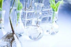 Bloemen wetenschap in blauw laboratorium Royalty-vrije Stock Fotografie