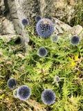 Bloemen in wildernis stock foto's