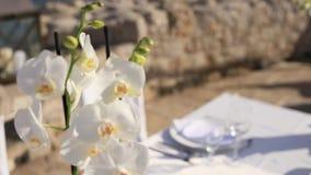 Bloemen witte orchidee, bloemenbloei en bloei stock videobeelden