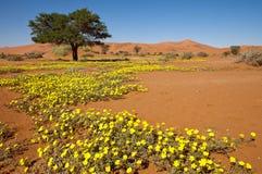 Bloemen in woestijn Royalty-vrije Stock Afbeeldingen