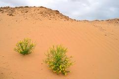 Bloemen in Woestijn stock afbeeldingen