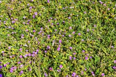 Bloemen in Yailata stock foto