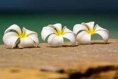 Bloemen Zanzibar Stock Afbeelding Afbeelding Bestaande Uit Zand