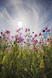 Bloemen in Zon Stock Afbeeldingen
