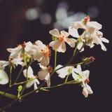 Bloemen in zonlicht Royalty-vrije Stock Foto's