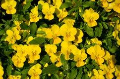 Bloemenachtergrond Stock Afbeeldingen