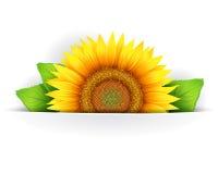 Bloemenachtergrond Royalty-vrije Stock Foto