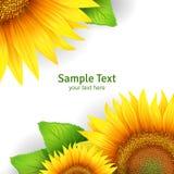 Bloemenachtergrond Stock Afbeelding