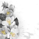 Bloemenachtergrond in grafische stijl Stock Afbeelding