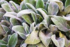 Bloemenachtergrond, groene gronddekking van pluizige bladeren van installaties stock foto's