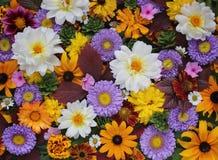 Bloemenachtergrond, hoogste mening Royalty-vrije Stock Afbeeldingen