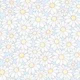 Bloemenachtergrond met camomiles Stock Afbeelding