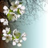 Bloemenachtergrond met een boomsilhouet Stock Foto