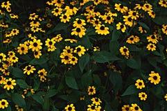Bloemenachtergrond met gele bloemen Royalty-vrije Stock Afbeeldingen