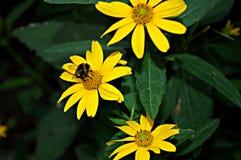 Bloemenachtergrond met gele bloemen Royalty-vrije Stock Afbeelding