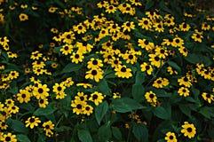 Bloemenachtergrond met gele bloemen Stock Foto