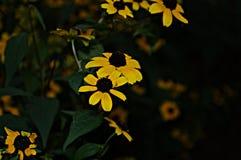 Bloemenachtergrond met gele bloemen Stock Fotografie