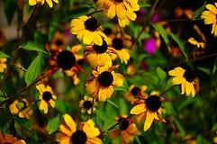 Bloemenachtergrond met gele bloemen Royalty-vrije Stock Fotografie