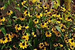 Bloemenachtergrond met gele bloemen Royalty-vrije Stock Foto's