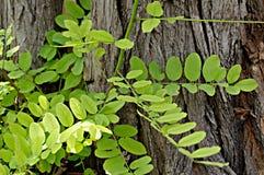 Bloemenachtergrond met groene bladeren en boom Stock Foto's