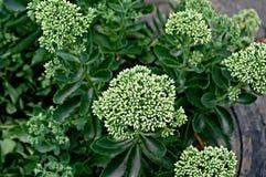Bloemenachtergrond met groene bloemen Stock Foto's