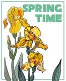 Bloemenachtergrond met hand getrokken irissen Royalty-vrije Stock Foto