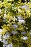 Bloemenachtergrond met lilac bloemen stock afbeeldingen