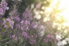 Bloemenachtergrond met onduidelijk beeld en zonsonderganglicht royalty-vrije stock afbeelding