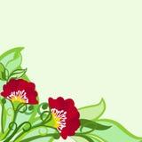 Bloemenachtergrond met Papavers en Bladeren Royalty-vrije Stock Foto's