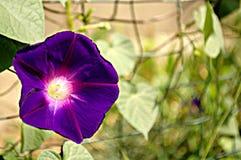 Bloemenachtergrond met purpere bloem Stock Fotografie