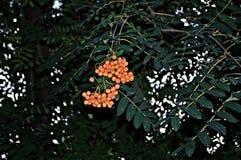 Bloemenachtergrond met rode bessen Stock Foto