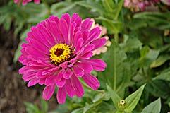 Bloemenachtergrond met roze bloem Royalty-vrije Stock Fotografie