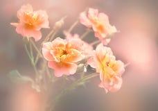 Bloemenachtergrond met roze bloemen stock foto's