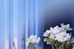 Bloemenachtergrond met viooltjes aangewezen voor tekstetiket royalty-vrije stock foto's