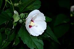 Bloemenachtergrond met witte bloem Stock Foto's