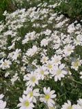 Bloemenachtergrond, mooie bloemen royalty-vrije stock foto