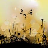 Bloemenachtergrond, onkruid Stock Foto's