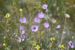 Bloemenachtergrond van gele en purpere bloemen royalty-vrije stock foto's