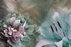 Bloemenachtergrond van turkooise lelie en groen-violette pioen Bloemenclose-up op een roze-turkooise achtergrond De samenstelling royalty-vrije stock fotografie