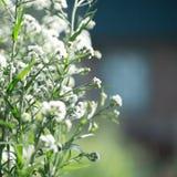 Bloemenachtergrond voor uw ontwerp Stock Afbeelding