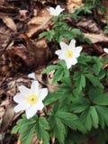 bloemenachtergronden Stock Afbeelding