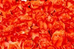Bloemenachtergronden Royalty-vrije Stock Foto