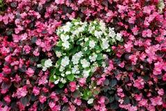 Bloemenachtergronden Stock Afbeeldingen