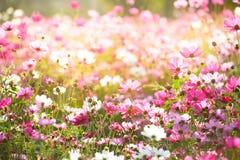 Bloemenachtergronden Stock Foto