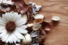 Bloemenaromadecoratie Royalty-vrije Stock Afbeeldingen