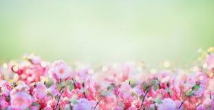 Bloemenbanner met roze bleke bloesem bij groene aardachtergrond in tuin of park royalty-vrije stock foto's