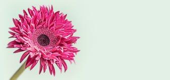 Bloemenbannerachtergrond met dichte omhooggaand van roze bloem stock foto's